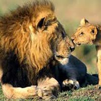 2 Nights / 3 Days Gir Jungle Safari Tour