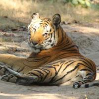 Panna Tiger Reserve Tour