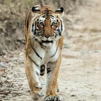 Ranthambore Tiger Reserve Tour