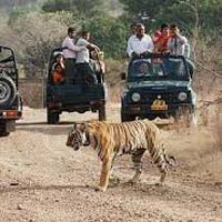 Wildlife Tour of Rajasthan