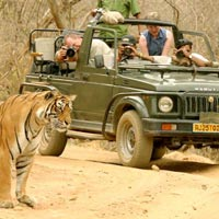 Heritage Tour With Agra and Tiger Tour