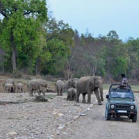 Wildlife Tour Packages Rajaji National Park