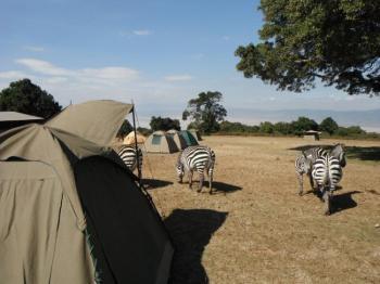 4 Days Serengeti Ngorongoro Crater Safari Package