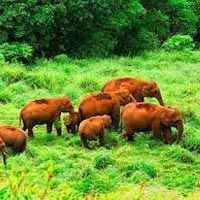 Enjoy Kerala Holiday Package