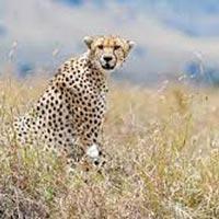 Kenya Wildlife Tour
