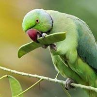 Himachal Bird Watching Tour