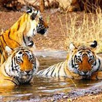Wildlife Ranthambore Tour