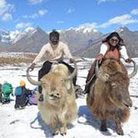 Honeymoon Tour Shimla Manali Chandigarh