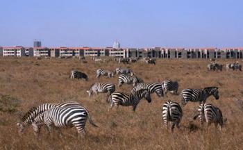 Nairobi Excursion Package