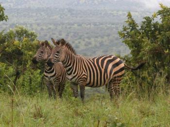 3 Days Akagera National Park Safari Package