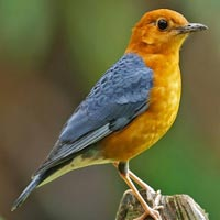 Andaman Bird Watching Tour