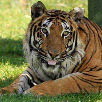 Wildlife with Golden Triangle Tour Package