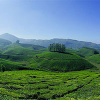 Kerala deluxe Hill station package with backawater 5days