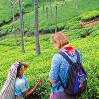 Kerala Deluxe Package 3Days
