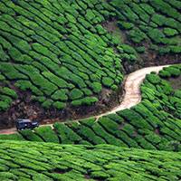 Hill station package (munnar package)