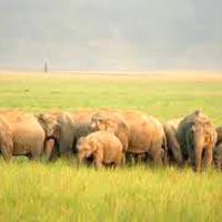 Agra - Jim Corbett Tour