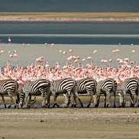 Discover The Secrets of Northern Tanzania Tour