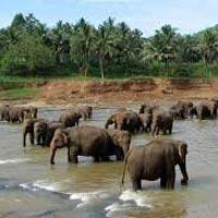 Exotic Sri Lanka Sri Lanka Tour