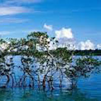 Port Blair - Havelock Island with Baratang Tour