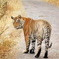 Exploring Tiger Land Tour