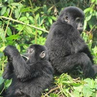 5-Days Gorilla Tracking and Canoe Trekking Tour