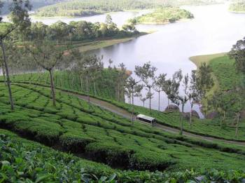 Kerala Hills & Backwater Package
