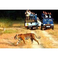 Golden Triangle Tour with a spice of Wildlife