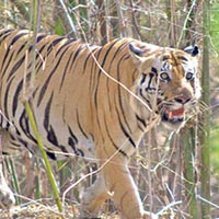 Delhi - Corbett National Park Weekend Tour