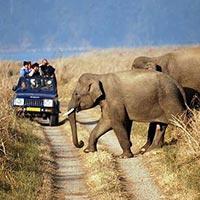 Delhi - Sariska National Park Weekend Tour