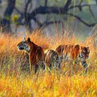 Bhitarkanika & Similipal National Park Tour