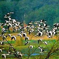 Bhitarkanika National Park & Tikarpara Sanctuary/Satkoshia Gorge