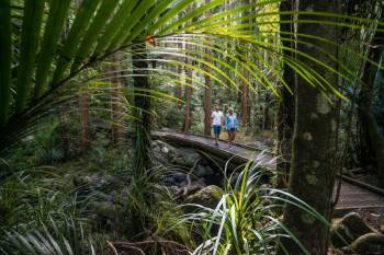 New Zealand - Northern Splendour