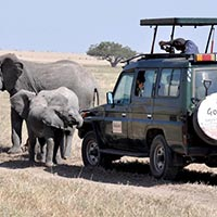 Tanzania Camping Safari 6 Days