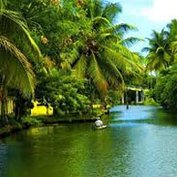 Really Spice Lands - Kerala Tour