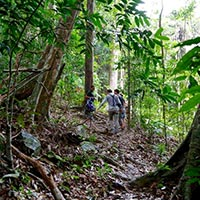 Jungle Trekking Discovery at Matchinchang Tour