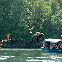 Langkawi Discover The Caves & Mangrove