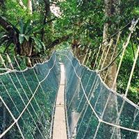 Discover Kinabalu Park, Relax at Poring Hot Spring Tour