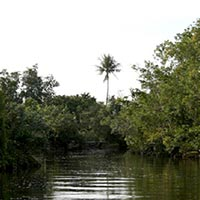 Discover the Germana Mangrove River (Shared Boat) Tour