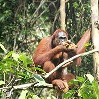 Semonggok Wildlife Rehabilitation Centre Tour