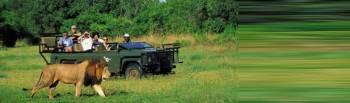 Spectacular South Africa Safari