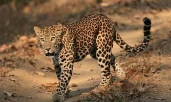Discover Wildlife Around Delhi Tour