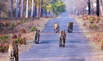 Wildlife Tour in Northern India