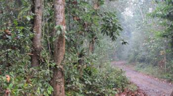 Kaziranga , Dibru, Saikhua , Panidihing, Jaypore Rain Forest Tour
