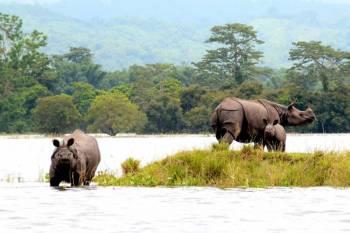 Guwahati, Chandubi Lake, Pobitora, Kaziranga, Shillong, Cherrapunji Tour