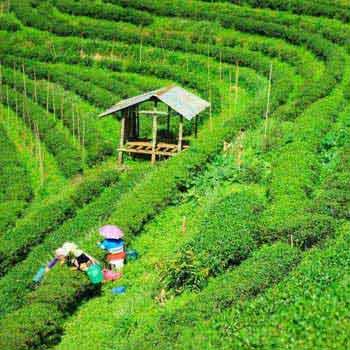 Guwahati, Shillong, Cherrapunji, Pobitora, Kaziranga, Majuli, Dibrugarh Tour