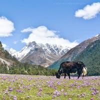 Sikkim Beauty Tour