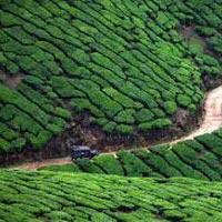 Explore Kerala Beauty Tour