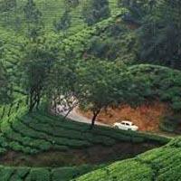 Kerala monsoon Tour Package 3 Nights 4 Days With  Free Ayurvedic Massage