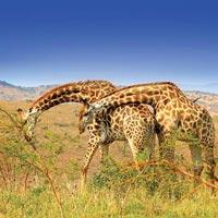 Kenya Discovery Tour