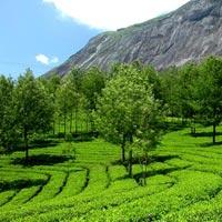 Greenery of Kerala 4 Night 5 Days Tour